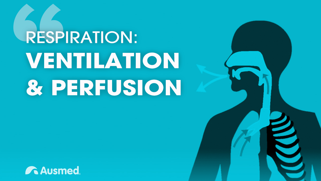 Image for Ventilation, Diffusion and Perfusion