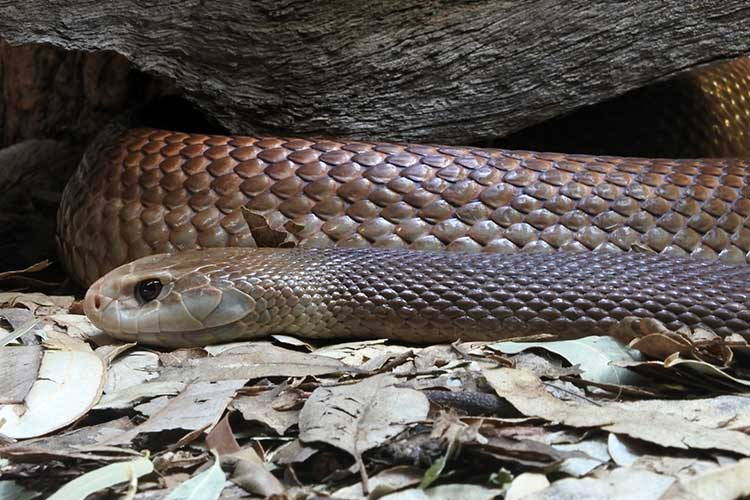 Image of a snake