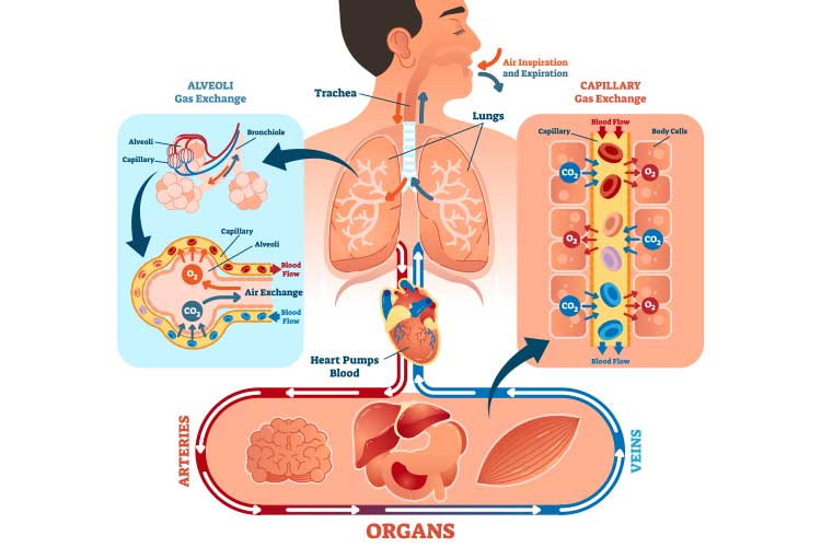 oxygenation diagram