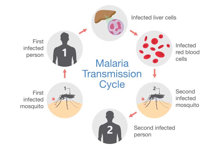 Malaria: Symptoms, Treatment & Prevention | Ausmed
