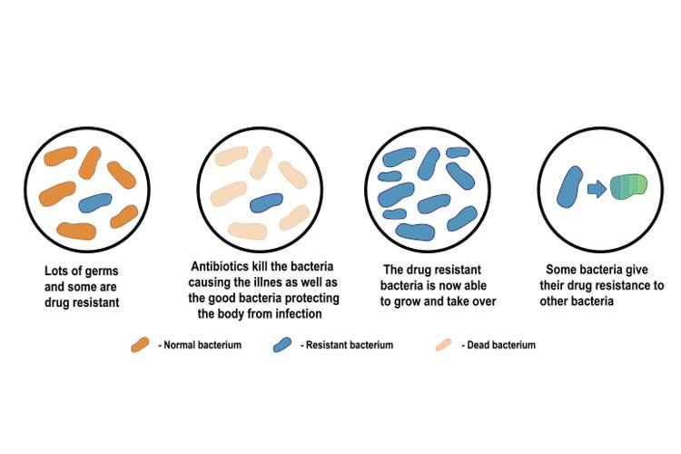 antibacterial resistance diagram