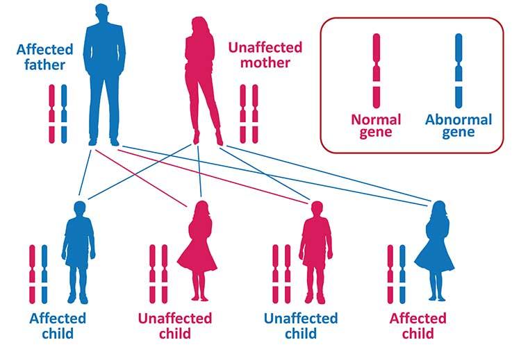 autosomal dominant disease inheritance pattern diagram