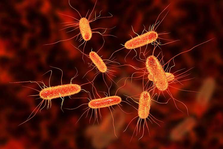 neonatal sepsis escherichia coli