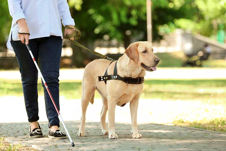 invisible disability aid guide dog cane